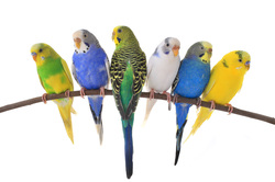 Budgees: small pet sitting service st albans