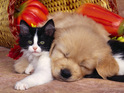 Kitten and puppy: pet sitting and dog walking services st albans